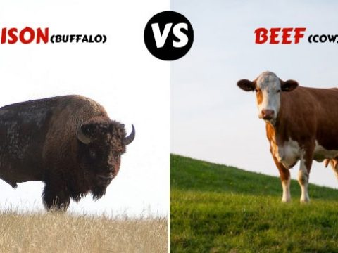 shocking truth about bison vs beef
